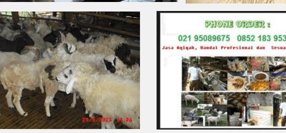 jasa aqiqah daerah depok sawangan