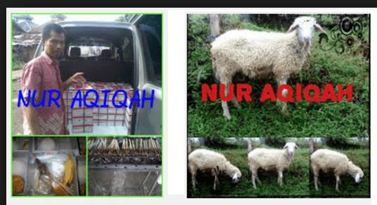 kambing aqiqah 2016 depok