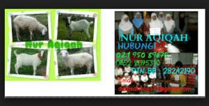 paket kambing aqiqah murah di daerah depok
